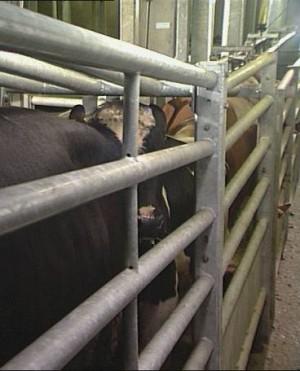 goveda smestaj